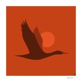 Yeco | Neotropic cormorant