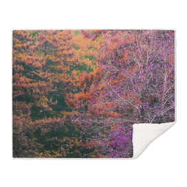 autumn tree in the forest with purple and orange leaf
