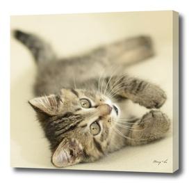 Lying Kitty-3