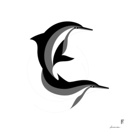 Delfín de hocico largo / Spinner dolphin