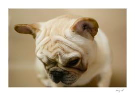 bulldog 2