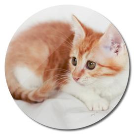lovely kitty-2