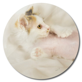 lying kitty-1