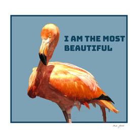 i am the mjost beautful