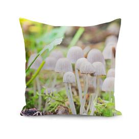 Toxic mushrooms
