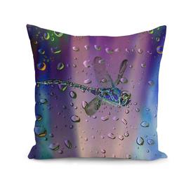 Raindrops-Dragonfly