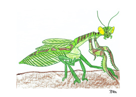 Liturgusa Krattorum