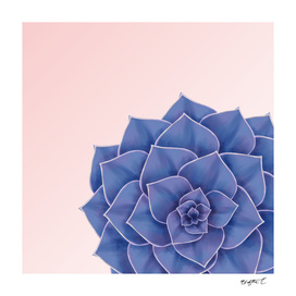 Big Echeveria Design