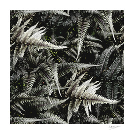 Ferns - A Pattern