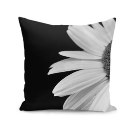 Half Daisy In Black And White