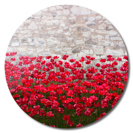 Tower Poppies 04B