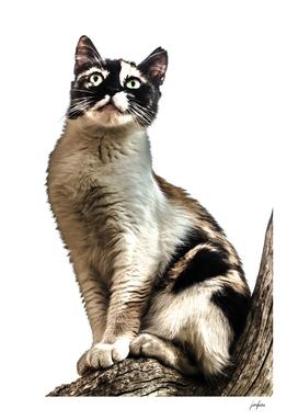 CAT I