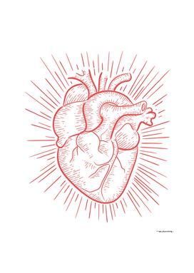 Human red heart digital illustration