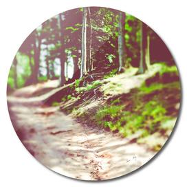 Walk With Me II
