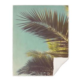 Autumn Palms