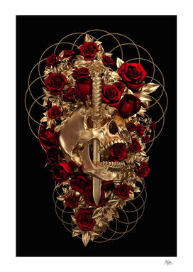 Cranium Rosa IV