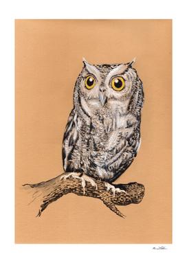 Barn Owl on Brown
