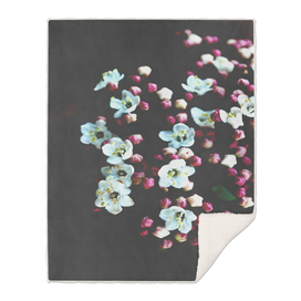 Botanical Still Life Photography Viburnum Flowers