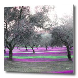Fishing-Olives-viola-2