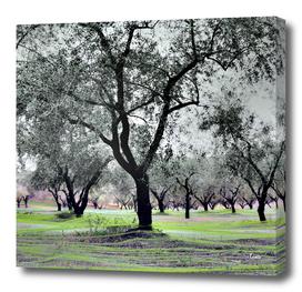 Fishing-Olives-verda-2