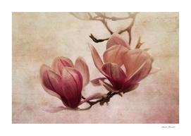 poem of spring