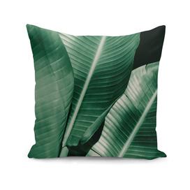 Banana leaf allure