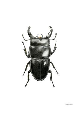 Mister Beetle