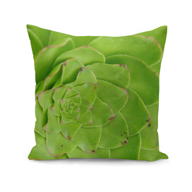 Geometric Green Succulent