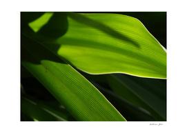 Soft Green Leaves