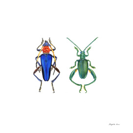 Insectopedia_chapter3