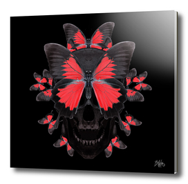 †  Papilionem †