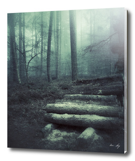 Foggy Forest Logs