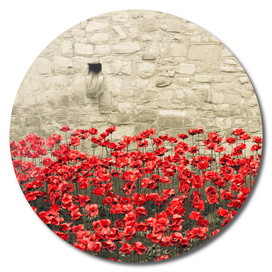 Tower Poppies 02A