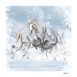 Wonderful white horses