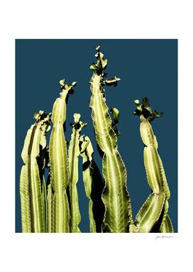 Cactus - blue