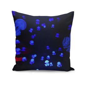 mastigias jellyfish