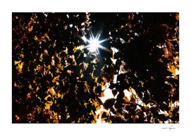 Autumn leaves with light leak
