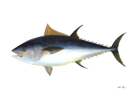 Vintage Bluefin Tuna Illustration