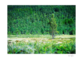 Dramatic green tree