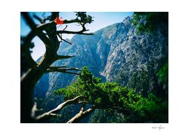 Greece mountain tree