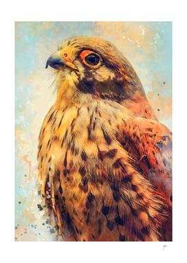 animal kestrel art