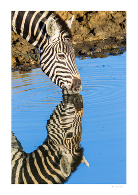 Zebra Drinking Mirror Double