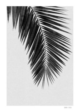Palm Leaf I BW