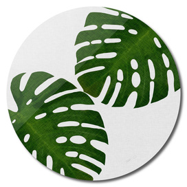 Monstera Leaf II