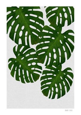 Monstera Leaf III