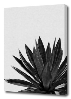 Agave Cactus BW