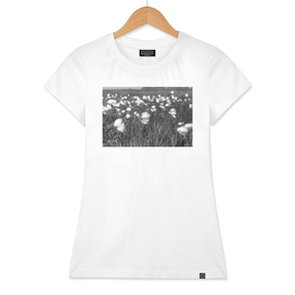 Field with cotton grass