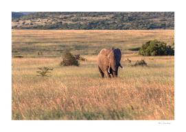 Bull Elephant Wilderness