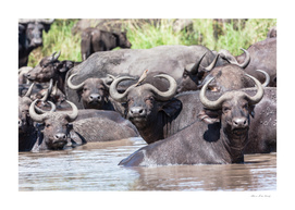 Buffalo Waterhole