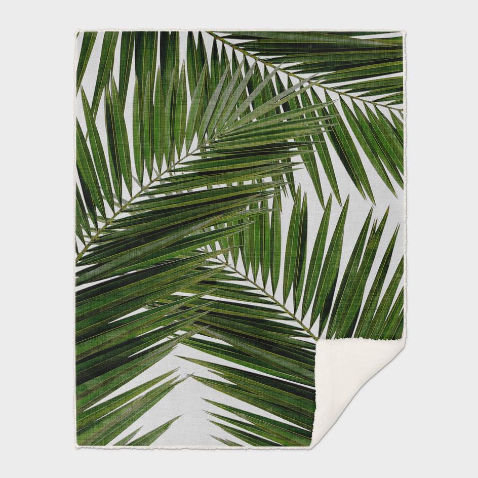 Palm Leaf II
